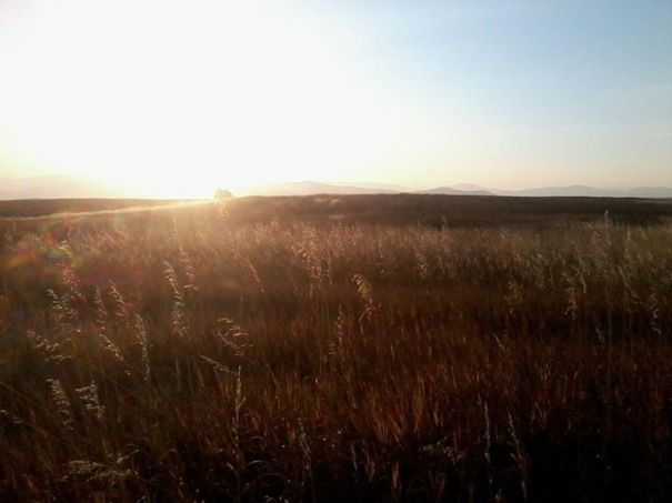 mission mountains, montana, foothills, sun, sunet, field, grass, bird hunting, pheasant, rooster hunting, hunting montana